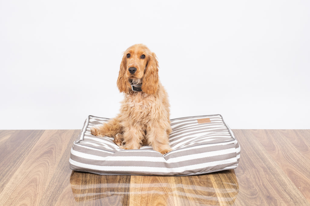 Classic Cushion Bed - Latte Hampton Stripe Print