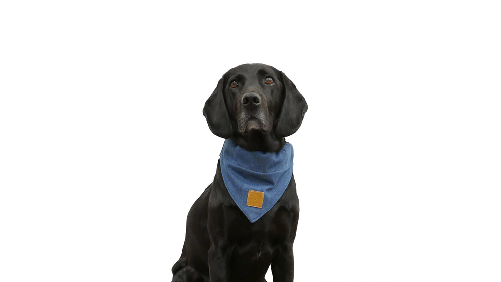 Dog Bandana - Blue Denim