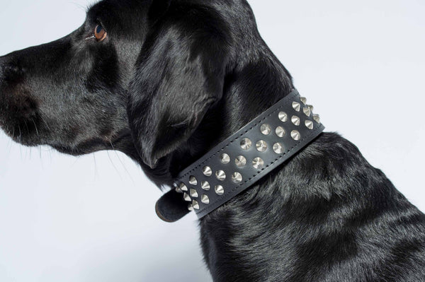 Studded Collar - Genuine Leather - Black
