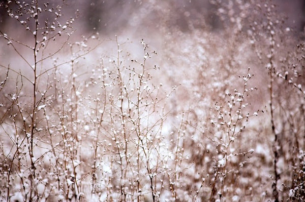 Winter's Icy Kiss Beckons you to Pause