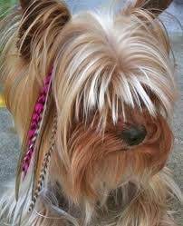 Hot New Pet Craze 5 Pink Grizzly Feather Hair Extensions for Your Dog or Pet - Sexy Sparkles Fashion Jewelry - 1