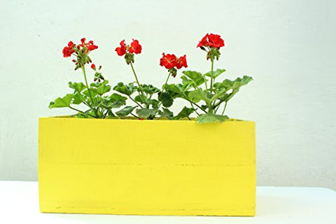Green Gardenia Table Top Wooden Box Planter-Yellow | SpreeIndia.com - India's First Website That Discovers Eco-Friendly Products