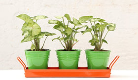 Green Gardenia Green Table Top Pots with Orange Tray | SpreeIndia.com - India's First Website That Discovers Eco-Friendly Products