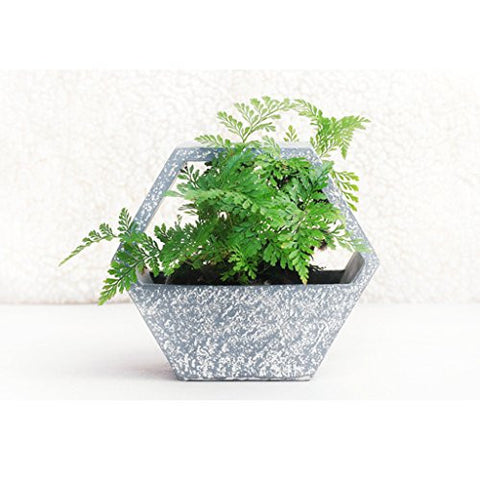 Segolike Resin Hexagon Succulent Plant Box | SpreeIndia.com - India's First Website That Discovers Eco-Friendly Products