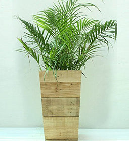 Green Gardenia Wooden Slap Planter - Large | SpreeIndia.com - India's First Website That Discovers Eco-Friendly Products