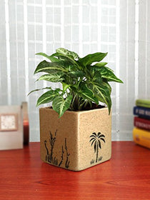 Rolling Nature Good Luck Air Purifying Live Green Syngonium Plant in Brown Square Aroez Ceramic Pot | SpreeIndia.com - India's First Website That Discovers Eco-Friendly Products