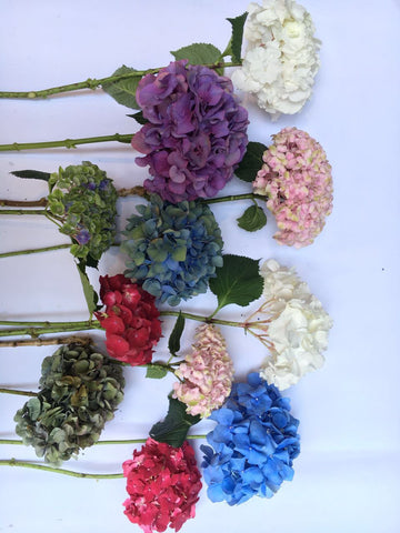 How to revive cut hydrangeas