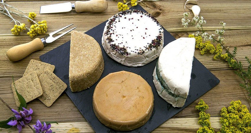 BASIC CHEESEMAKING TIPS: What To Do And What To Avoid
