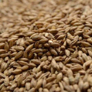 Briess 2 Row Brewers Malt 1.8L Grain