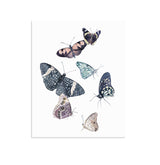 """Windswept Wanderers"" Set of Two Butterfly Prints"
