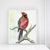 """Red"" Cardinal Bird Art Print"