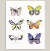 """Flying Colors"" Butterfly Art Print"