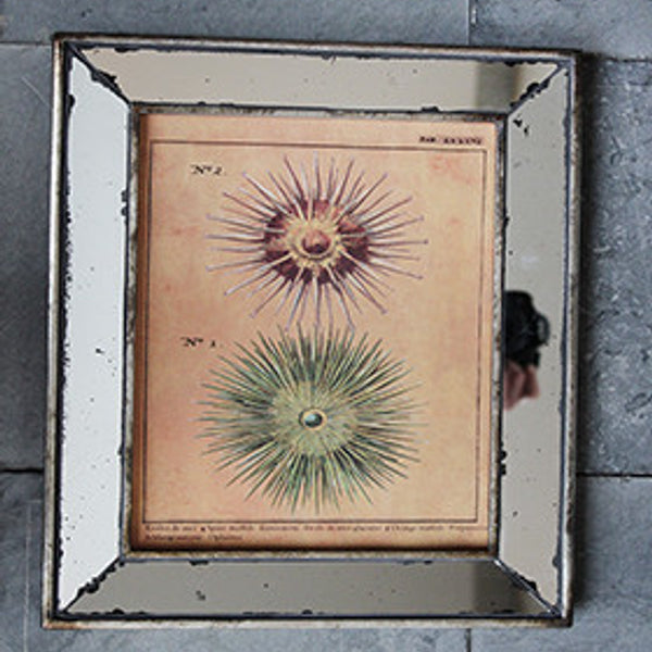 Mirror Frame - Sea Urchin - The Nest Shop