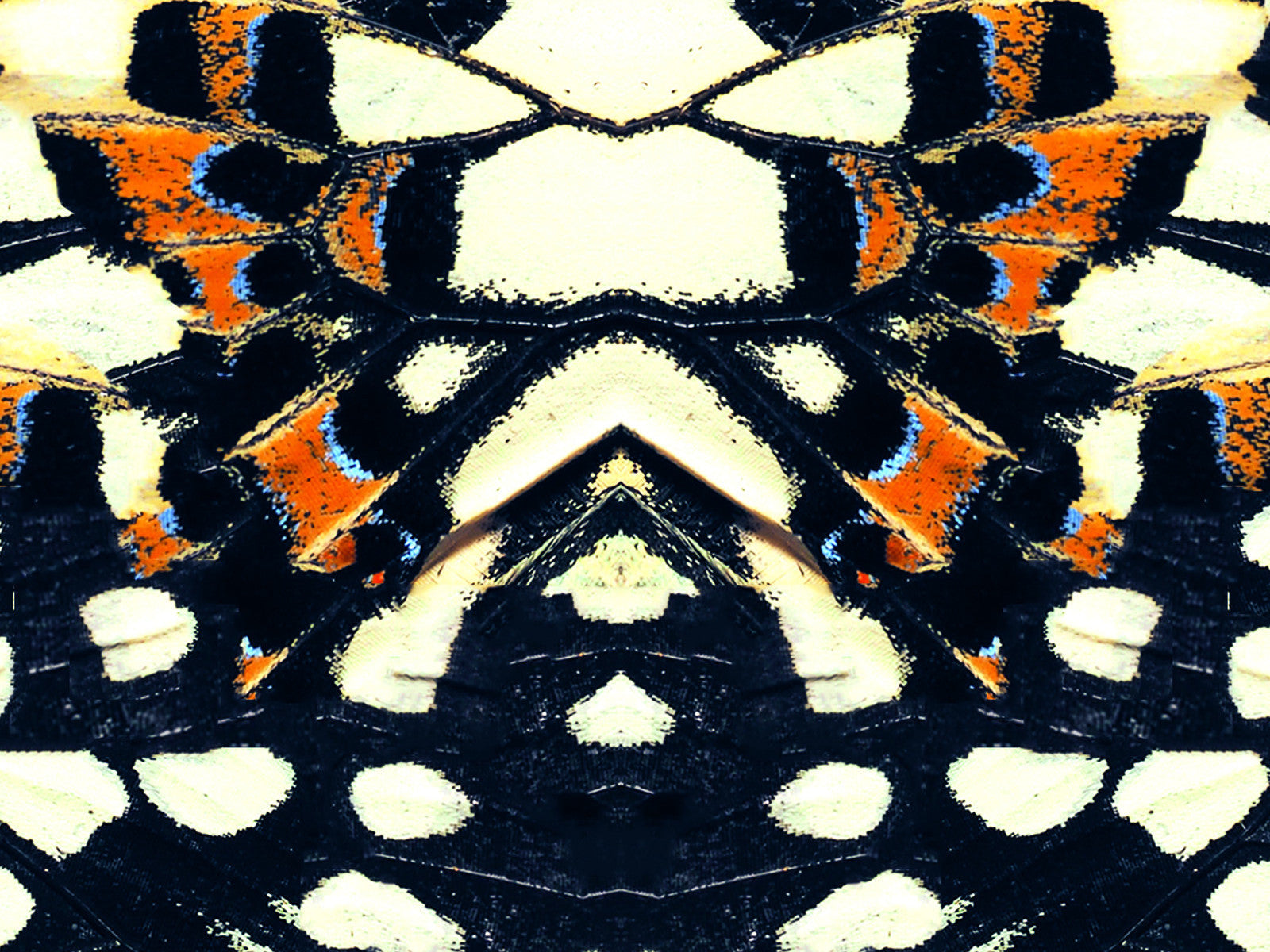 Khu Khu Black Nymph Beautiful Symmetrical Butterfly Print Hand-Fan, close up of the off white print with hints of blue and burnt orange.