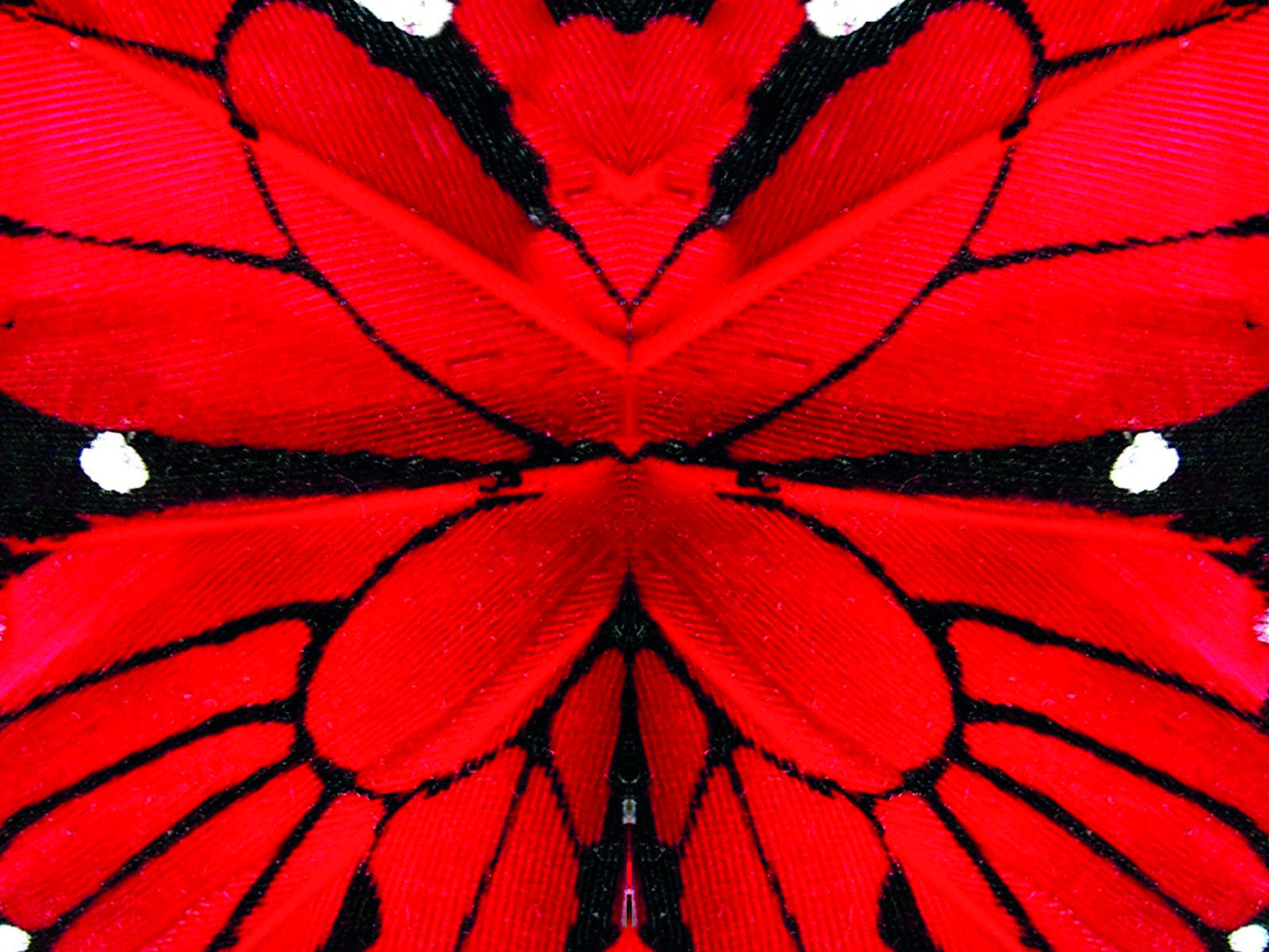 Red Papillon