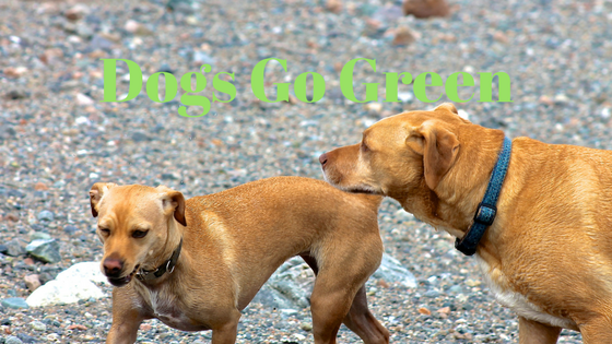 Dogs Go Green