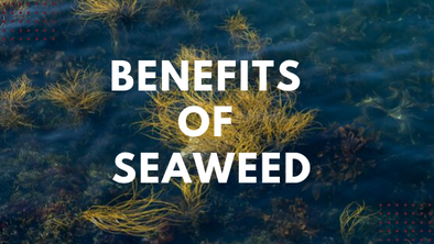 Seaweed and Stress