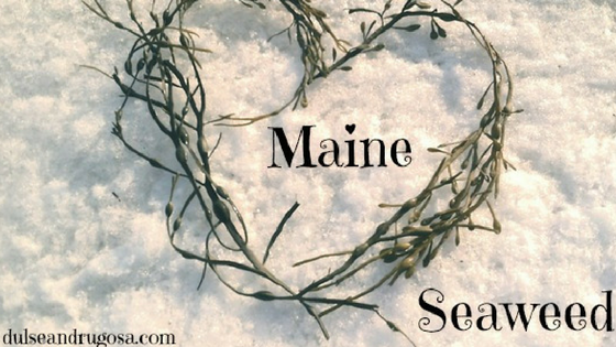 Celebrating Maine Seaweed