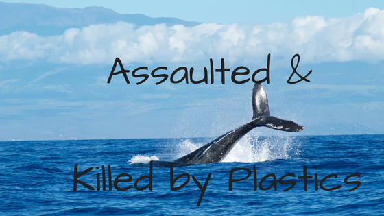When Will There Be Good News?  Whale Assaulted and Eventually Killed By Plastic