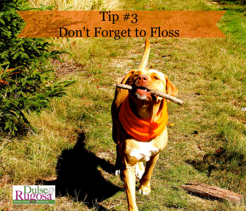 Beauty tips from dogs- flossing is important.