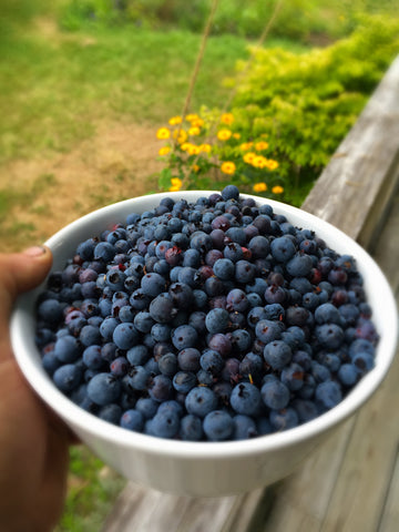 Wild Maine blueberries.