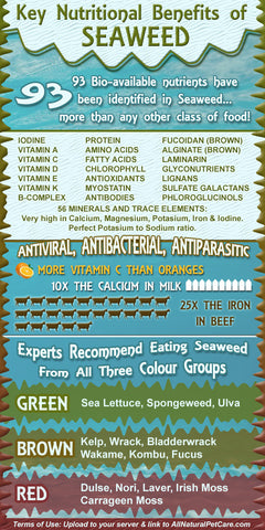 Benefits of seaweed for your dog.