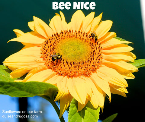 Bee nice, especially to yourself.