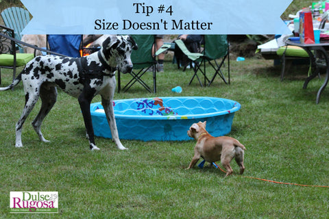 Beauty Tips from Dogs- size doesn't matter.
