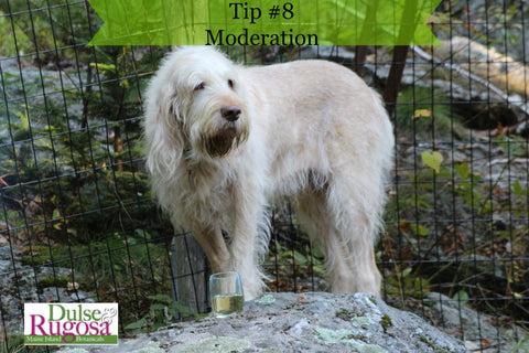 Beauty tips from dogs- moderation.