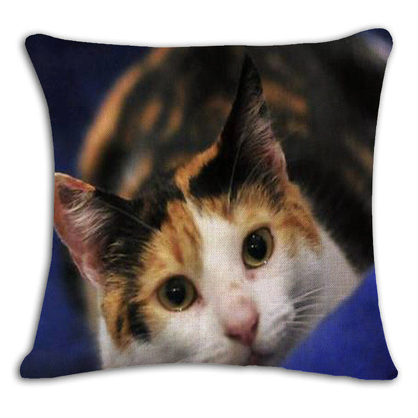 Colorful Cartoon Cats Decorative Sofa Pillow Case