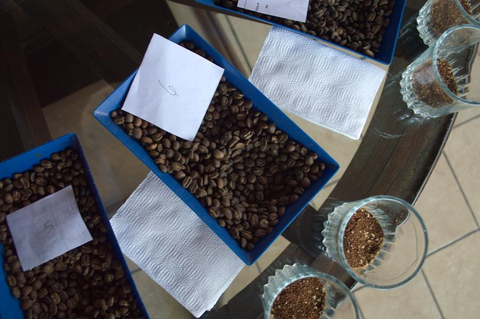Host a Coffee Tasting