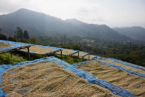 coffee farming terms