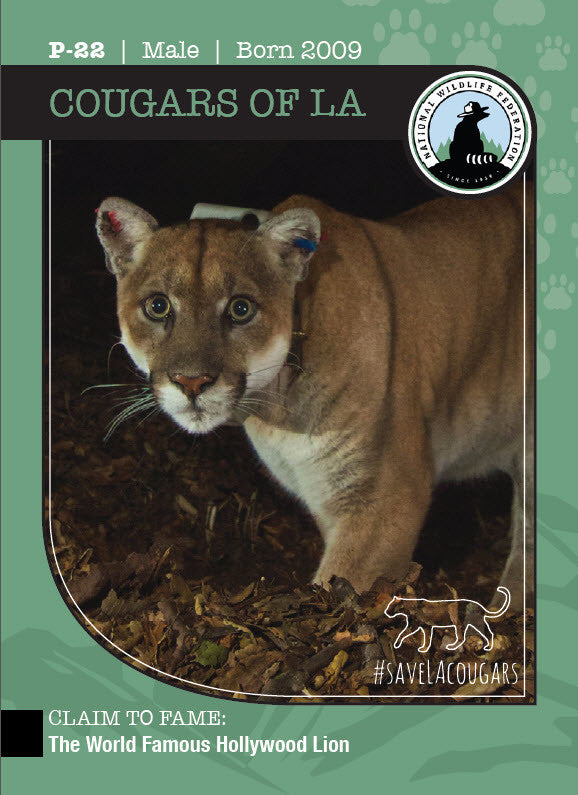 Cougars of LA Trading Cards: 2017 Series 1
