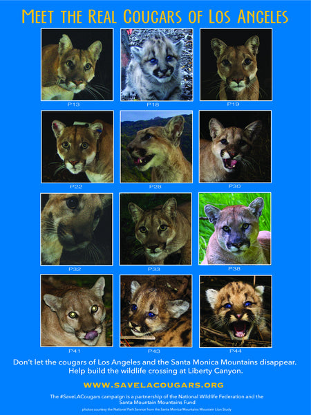 Meet the Real Cougars of Los Angeles Special Poster: $100 Donation