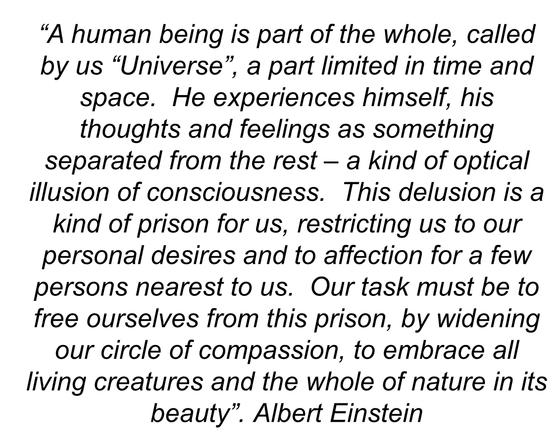 Einstein Quote-man as part of universe