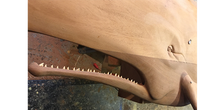 "Load image into Gallery viewer, 48"" Sperm Whale with Teeth"