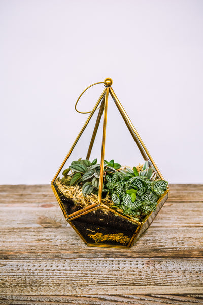 Bronze Terrarium by Ivyline