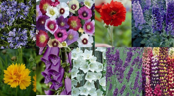 Cottage Garden Perennial Plant Offer