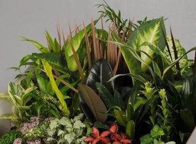 Houseplant Fabulous Foliage Medium Mix