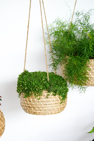 Hanging Seagrass Planter Set Ivyline