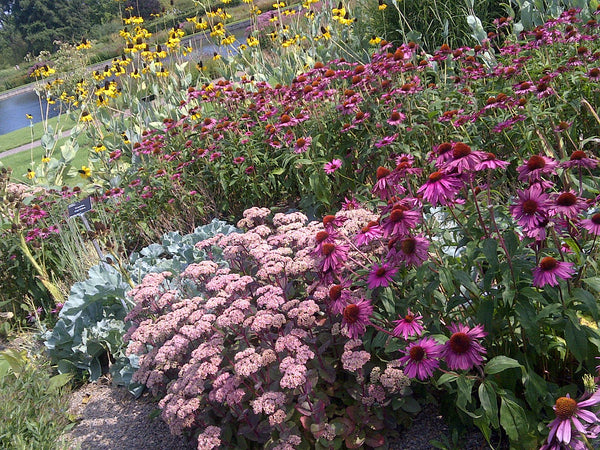 24 Large Plants! An Ultimate Border Surprise Collection