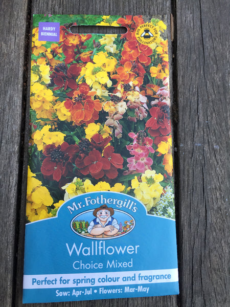 Wallflower Choice Mixed by Mr Fothergill's