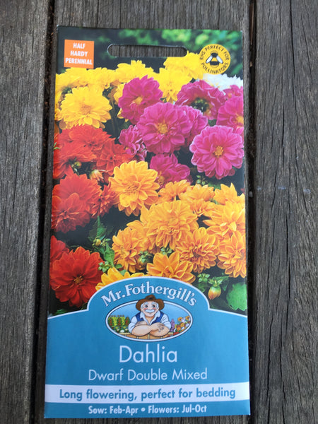 Dahlia Dwarf Double Mixed Seeds by Mr Fothergill's