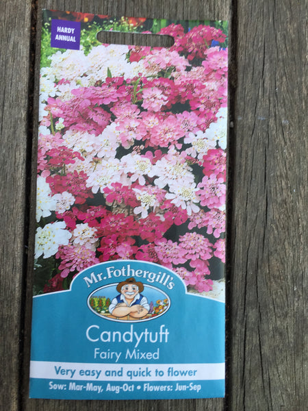 Candytuft Fairy Mixed Seeds by Mr Fothergill's