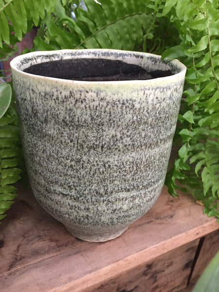 henna thyme planter neutral pot