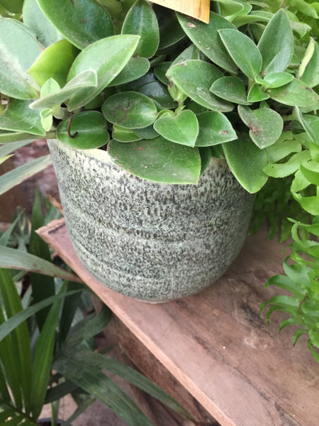 neutral artisan plant pot henna thyme