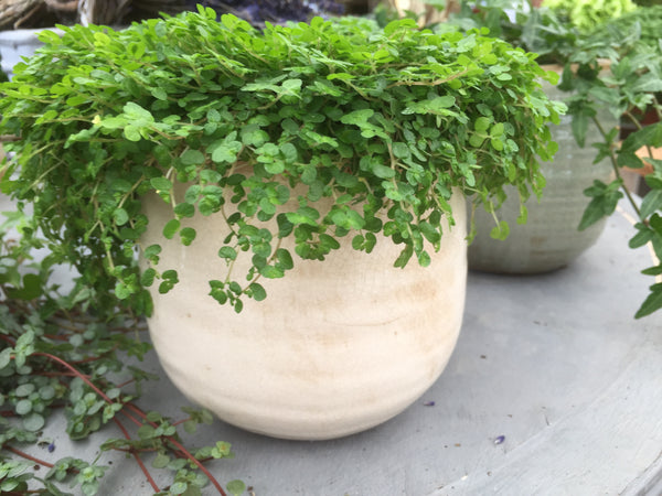 IVYLINE CREAM HOUSE PLANT POT