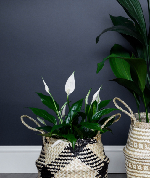 Seagrass Black Lined Plant Basket