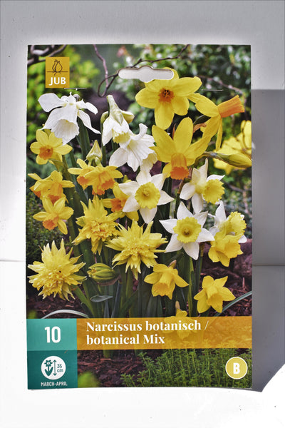 Narcissus Botanical Mix bulbs