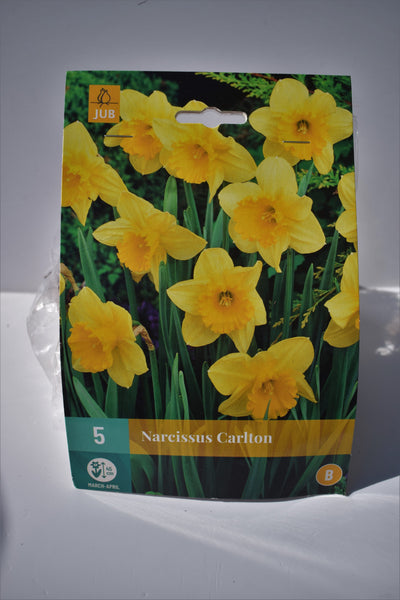 Narcissus Carlton bulbs